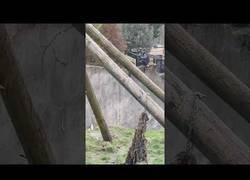 Enlace a Evasión en el zoo por parte de estos chimpancés
