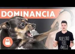 Enlace a Dominancia en perros