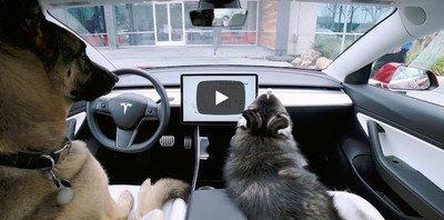 Tesla introduce el sistema para regular la temperatura de los coches cuando un perro se queda solo dentro