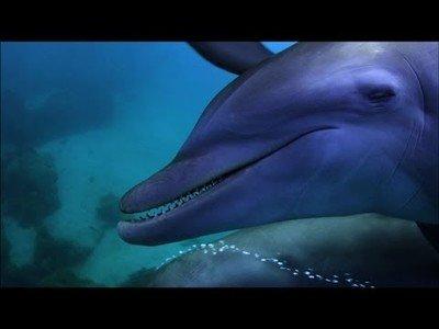Los delfines son unos adictos a los peces globo