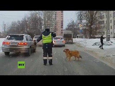 La policía detiene el tráfico en Rusia para que pase un perro
