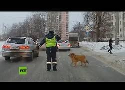 Enlace a La policía detiene el tráfico en Rusia para que pase un perro