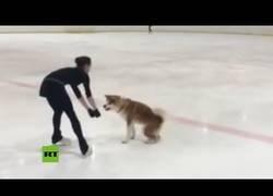 Enlace a Esta campeona olímpica de Pyeongchang 2018 se graba como entrena con su perrita