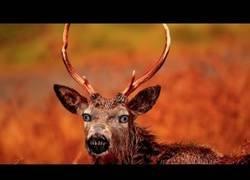 Enlace a Los ciervos zombie
