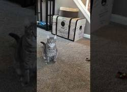 Enlace a La bonita gata pidiendo amablemente a su dueña que quiere jugar