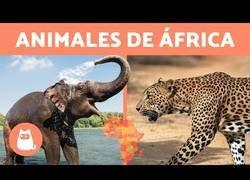 Enlace a Animales de África