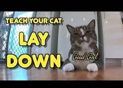 Enlace a El gran truco para hacer que tu gato se levante o siente con una única orden