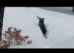 Enlace a Se queda atascado en la nieve y su compañero va en su búsqueda