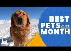 Enlace a Los animales más adorables que hemos visto en febrero