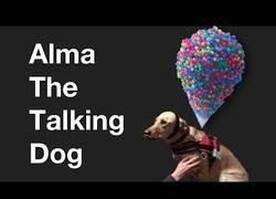 Enlace a Están desarrollando un sistema en la universidad de Illinois para saber qué habla tu perro