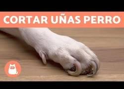 Enlace a ¿Cómo cortar las uñas de tu perro en casa?