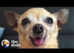 Enlace a El porqué de adoptar un perro senior