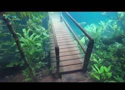 Enlace a El hermoso fenómeno natural que da la oportunidad de recorrer un bosque bajo el agua