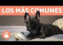 Enlace a Problemas de conducta en los perros