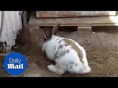 Conejo rescatando a un gato