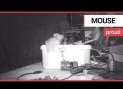 Enlace a Este ratón encontró el trastero desordenado y se puso a poner cada cosa dentro de una caja