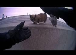 Enlace a La gran historia de este oficial de policía que salvó a un gatito en mitad de la autopista