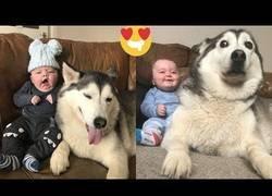 Enlace a Este husky prometió cuidar del bebé desde el día 1 y es el vídeo más tierno que verás nunca