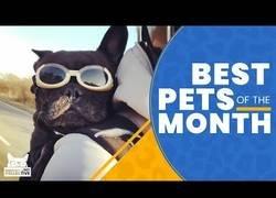 Enlace a Los mejores animalicos que hemos conocido en el mes de marzo