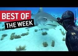Enlace a Lo más viral de la última semana en la red