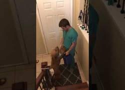 Enlace a La alegría de este perro cada vez que su dueño vuelve del trabajo en el Hospital