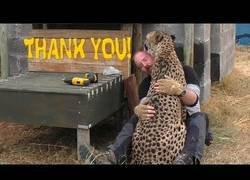Enlace a Este guepardo agradece con cariño a su gran amigo que le construya escalones por los problemas con sus patas