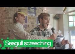 Enlace a El extraño campeonato en Bélgica sobre imitar gaviotas