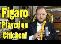 Enlace a Tocando Figaro de Rossini con un pollo de goma