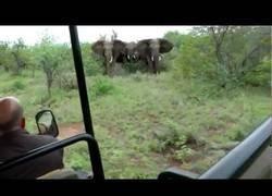 Enlace a Estos elefantes andan bien enfurecidos con este auto de turistas