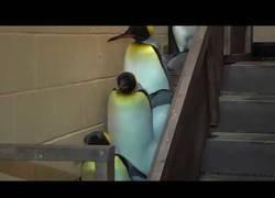 Enlace a La fuerza oscura de los pingüinos