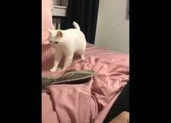 Enlace a Este gato ha pillado a la perfección los ritmos del beatbox