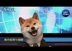 Enlace a Las noticias en Japón presentadas por un perro