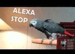 Enlace a Este loro odia la música que pone Alexa y le hace callar