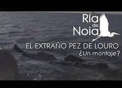 Enlace a Un extraño pez en Galicia
