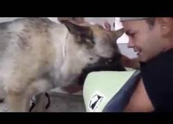 Enlace a Emotivo despido a un perro policía que es sacrificado por enfermedad