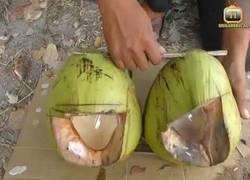 Enlace a El gran truco para pescar peces con un coco