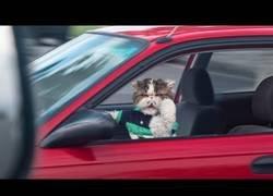 Enlace a La aventura de los animales conduciendo