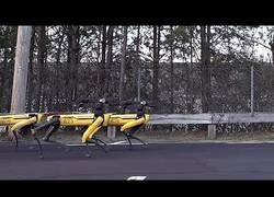 Enlace a Boston Dynamics va un paso más allá y se inventa el trineo con robots