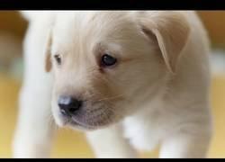 Enlace a El maravilloso momento en el que este cachorro abre los ojos por primera vez