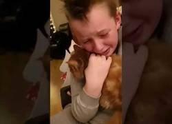 Enlace a El emotivo encuentro de este niño y su gato que se perdió hace 7 meses