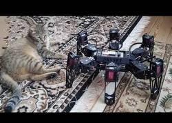 Enlace a Los gatos y los robots son amigos