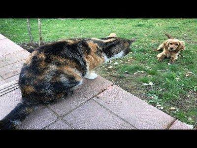 Este grupo de gatos no dejará por ningún caso pasar a este perro al jardín