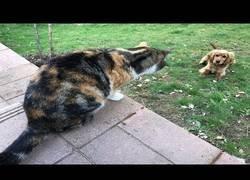 Enlace a Este grupo de gatos no dejará por ningún caso pasar a este perro al jardín