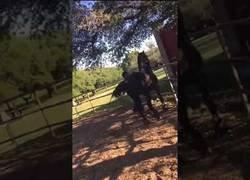 Enlace a NO es NO versión caballos