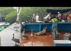 Enlace a La experiencia de compraren esta pescatería en las Islas Galápago