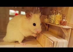 Enlace a La adorable cocina de este bonito hamster