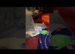 Enlace a Loro haciendo un truco de cartas