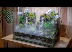 Enlace a Construyendo un alucinante aquaterranium con todo tipo de detalles