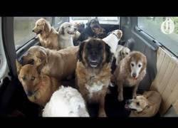 Enlace a Dedicarse a cuidar perros a otro nivel