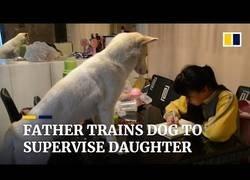 Enlace a Padre entrena al perro para que su hija no se distraiga con los deberes
